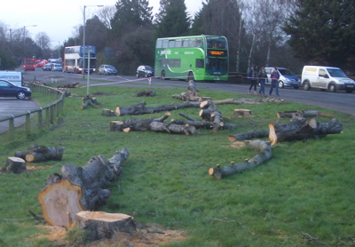 Trees Felled Outside Addenbrooke's