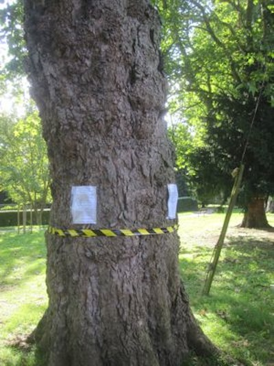 Residents Are Organising to Oppose Council Plans to Destroy Trees on Alexandra Gardens.