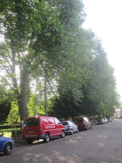 The currently tree-lined Carlyle Road would be changed dramatically if the foliage were to be lost.