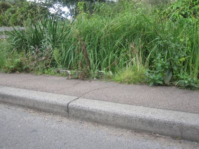 Can Toads Jump? Image shows the curb at Burnside which may be an insurmountable hurdle to toads.