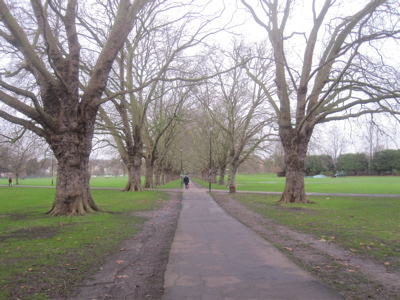Repairing the path under the avenue of plane trees on Jesus Green is at last high up the city council's list of priorities.