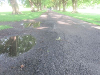 Only Cllr Whitebread argued the path under the plane tree avenue ought be the first priority.