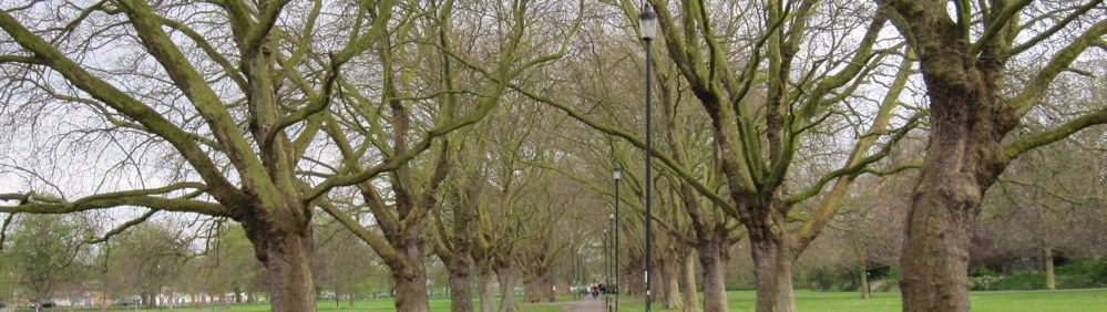 The Spectacular Jesus Green Plane Tree Avenue