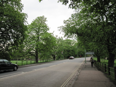Victoria Avenue, Cambridge, Horse Chestnuts