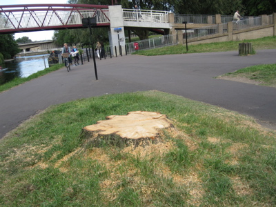 The Riverside Lime Tree Stump