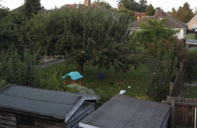 Liberal Democrat Councillors Have Approved Building a New Bungalow on the site of this tree in a Cambridge Back Garden